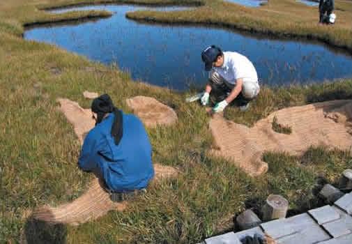 Restoring vegetation of denuded wetlands[Hachimantai]