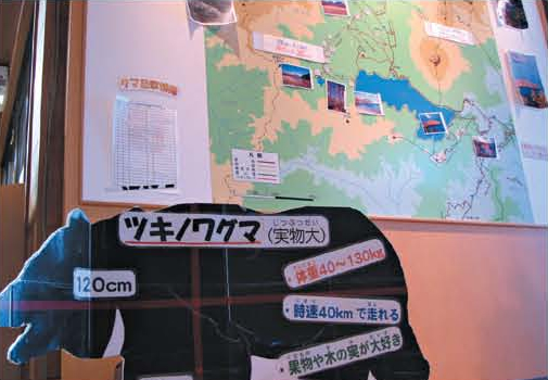 Providing information of bears at the visitor center[Nikko]