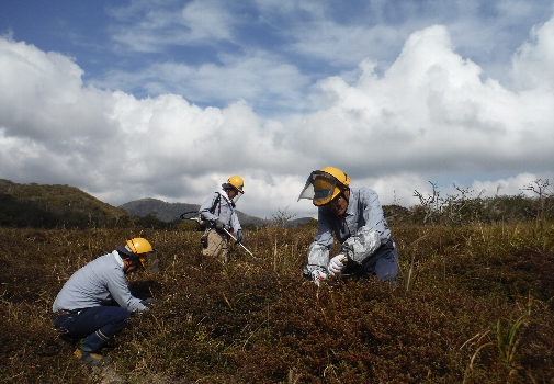 Conservation activity of Kyushu Azalea[Takachihogawara]